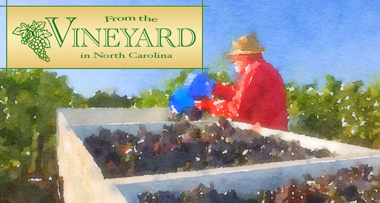 Watercolor Grape Dump   From the Vineyard in NC